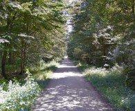 Forêt de Saint-Aubin